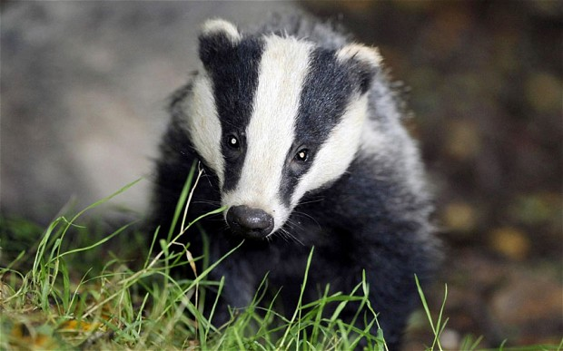Badger finds cremated remains near Stonehenge