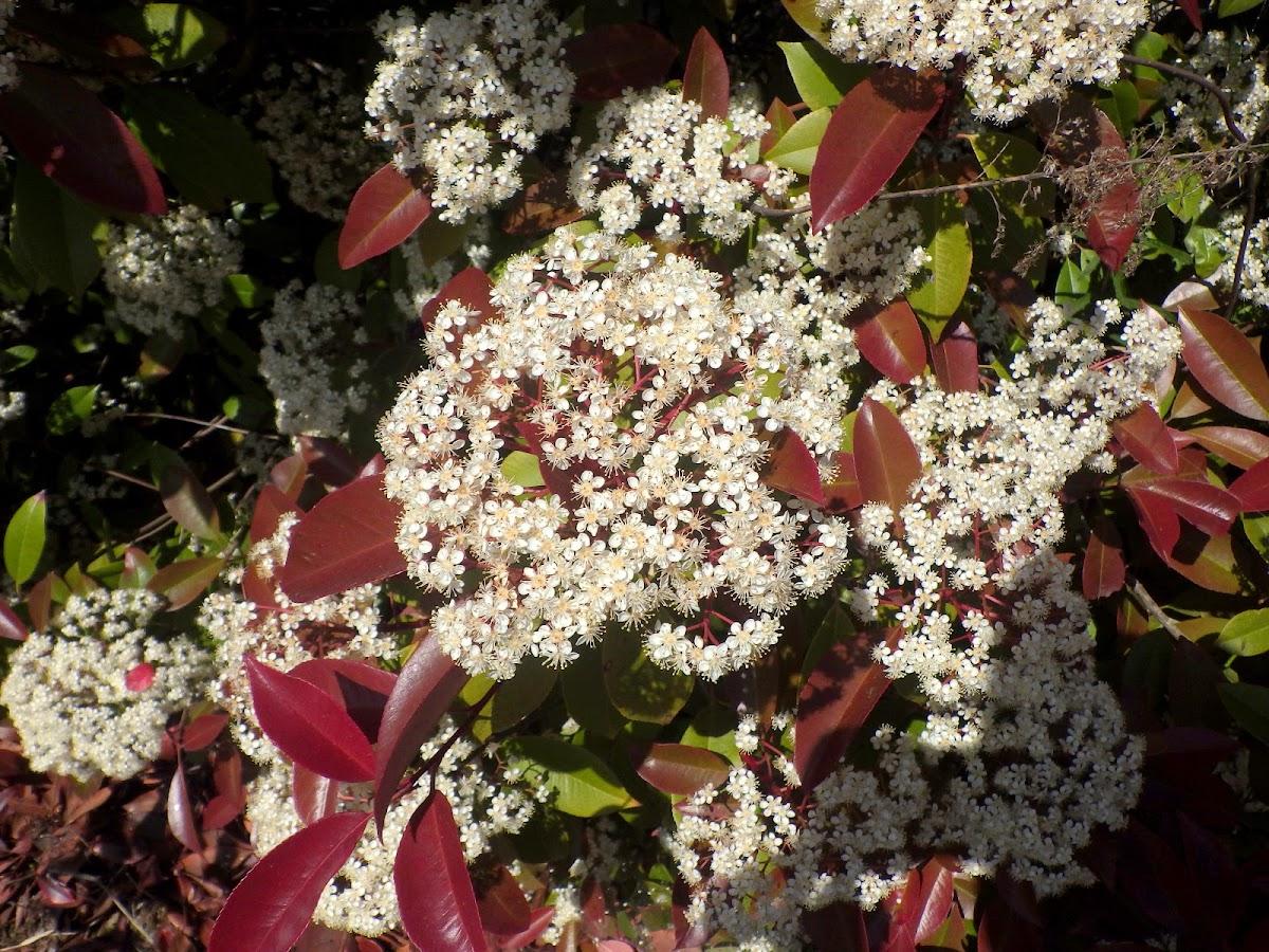 花序の様子