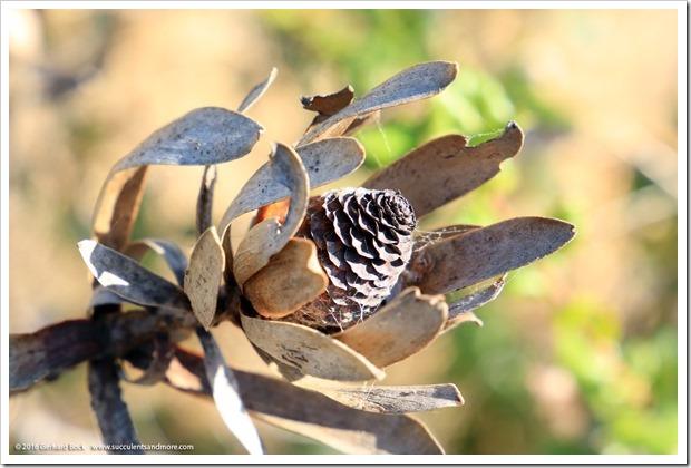 160813_UCSC_Arboretum_033