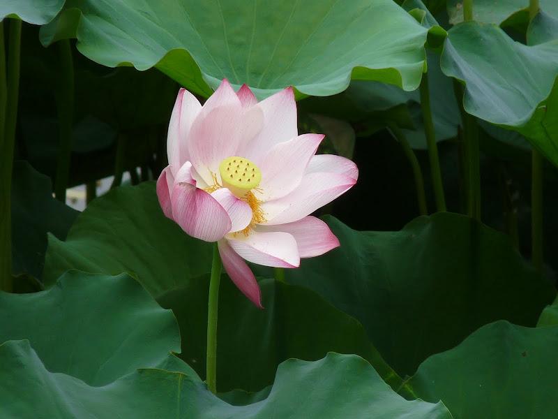 Chine . Yunnan..Galamba, Menglian Album A - Picture%2B405.jpg