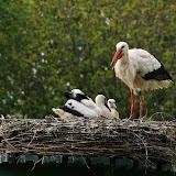 Vogels en dieren - IMG_7256.JPG