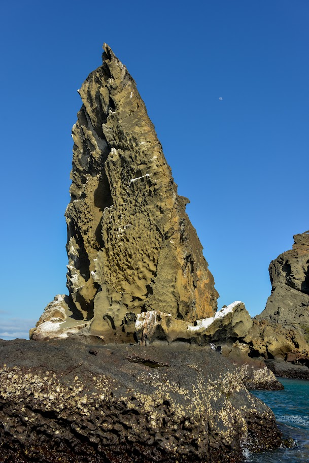 galapagos - Galapagos_FB-139.jpg