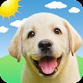 Weather Puppy - App & Widget Weather Forecast APK