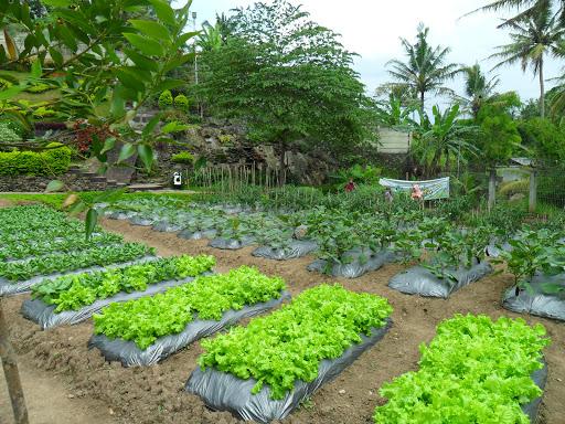 cimory farm n plantation