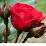 bac lieu hoang tu's profile photo