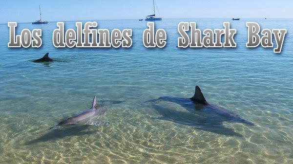 Los delfines de Shark Bay [SATRip][Espa�ol][2013]