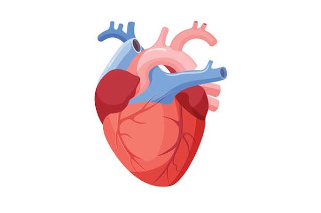 Yang Menyebabkan Seorang Bisa Terkena Sakit Jantung