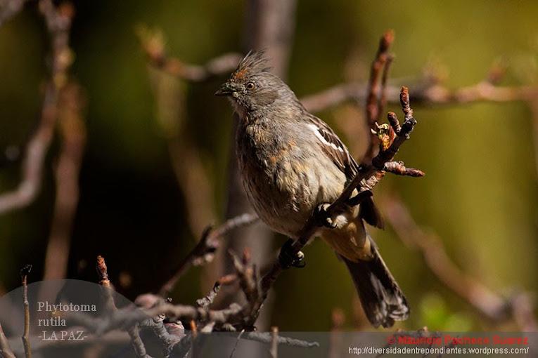 Aves De La Paz (desde La Ventana