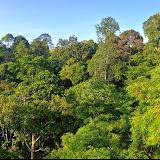 Forêt primaire de Diptérocarpes. Sepilok, Sabah (Malaisie), 11 août 2014. Photo : T. Boucher