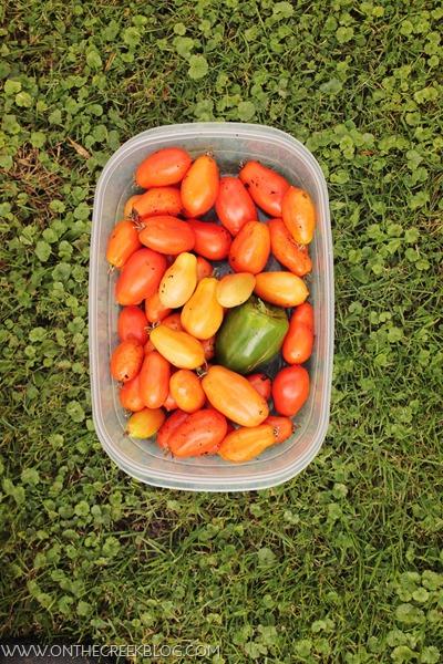 Garden Harvest // Roma Tomatoes & Green Pepper
