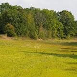 Pré en septembre ; biotope de Polyommatus icarus, Colias croceus, Pieris rapae. Les hautes-Lisières, 12 septembre 2009. Photo : J.-M. Gayman