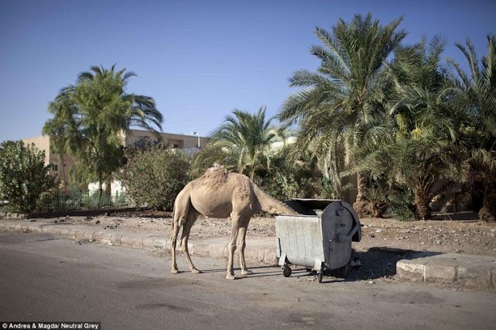 Плоховато в Египте без туристов 5