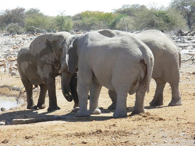 أفضل ما في أفريقيا  Best of Africa Namibia_180807114230