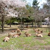 2014 Japan - Dag 8 - tom-SAM_0539-0044.JPG