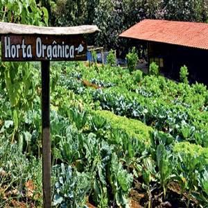 Horta orgânica doméstica