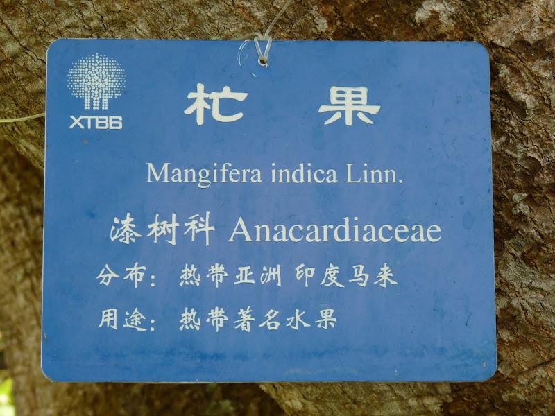 Chine .Yunnan . Lac au sud de Kunming ,Jinghong xishangbanna,+ grand jardin botanique, de Chine +j - Picture1%2B567.jpg
