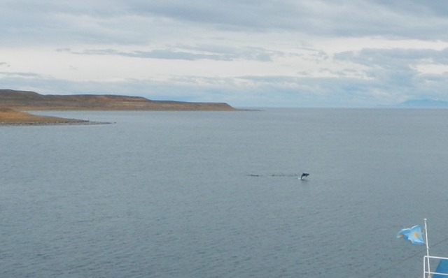 Magellanstrase Delfin