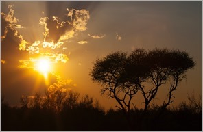Safari-Honeymoon-Sunset-long_thumb3