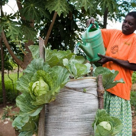 A vertical 'bag garden' that uses an old sack to grow food in