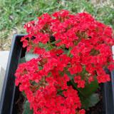 Gardening 2010 - 101_0889.JPG