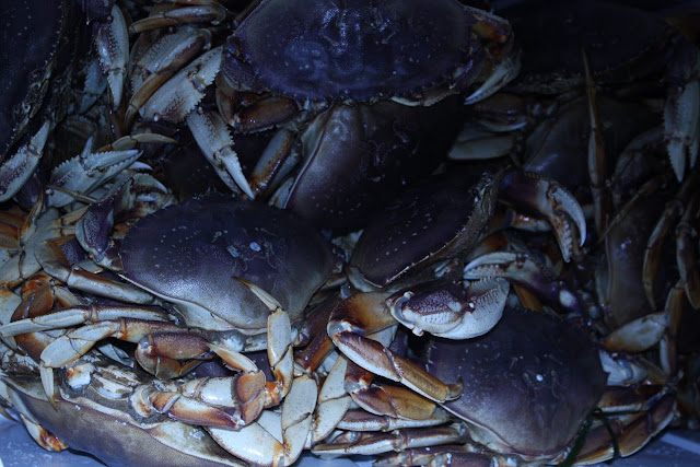 2010 Crab Feed - IMG_5578.JPG