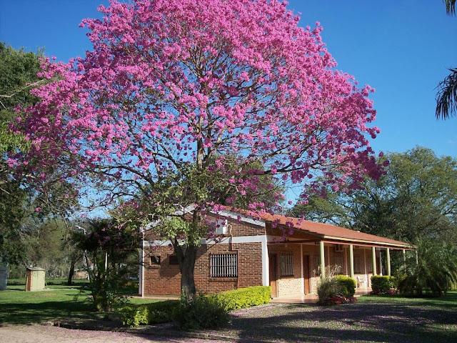 exterior de la escuela - 5-8-05%2B135.jpg