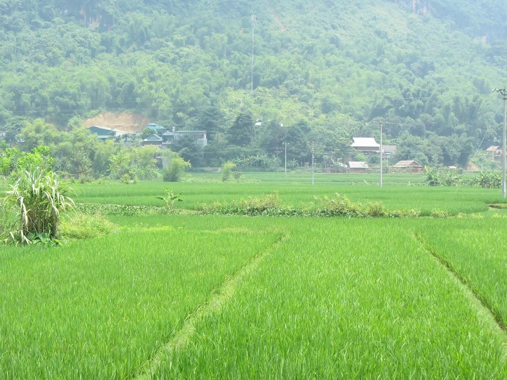 0052Mai_Chau