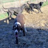 Jasper, Kiya & Celeste