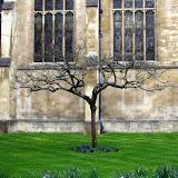 剑桥 Cambridge