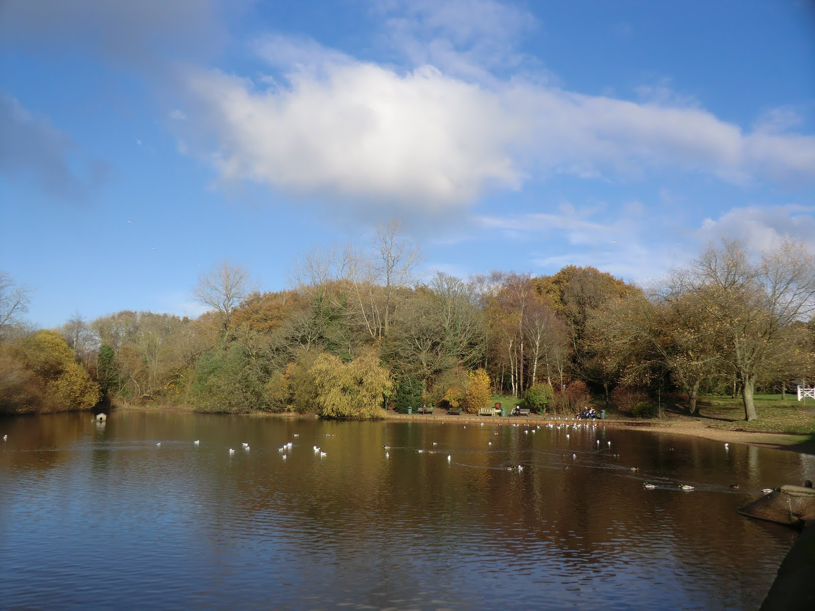 CIMG5864 Mere Pond in autumn, Walton-on-the-Hill