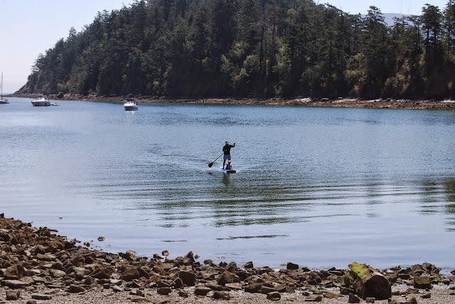 A paddleboarder approaches the shore at Sucia Island State Park / Credit: Bellingham Whatcom County Tourism