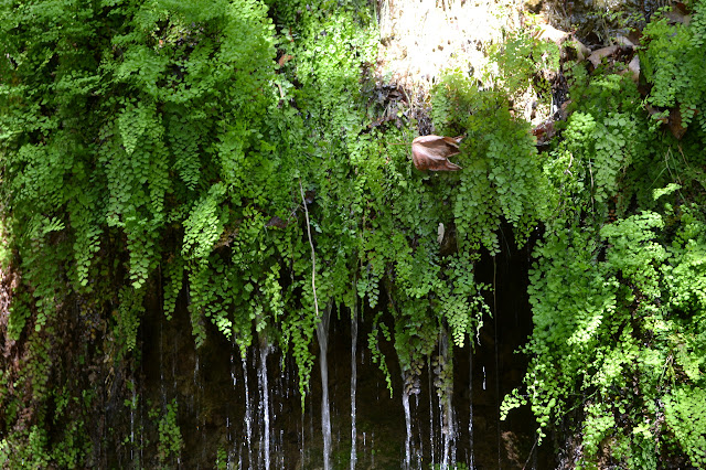 water and ferns