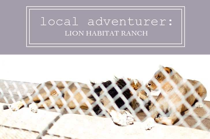 Local Adventurer Link Up Feature: Lion Habitat Ranch Las Vegas.