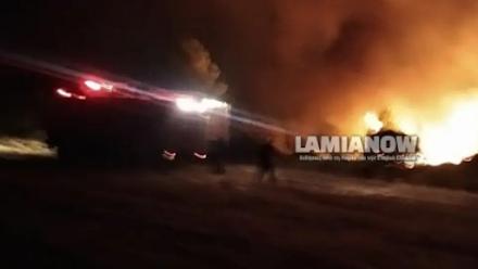 Φωτιά σε δασική έκταση κοντά στο Μαρτίνο Φθιώτιδας