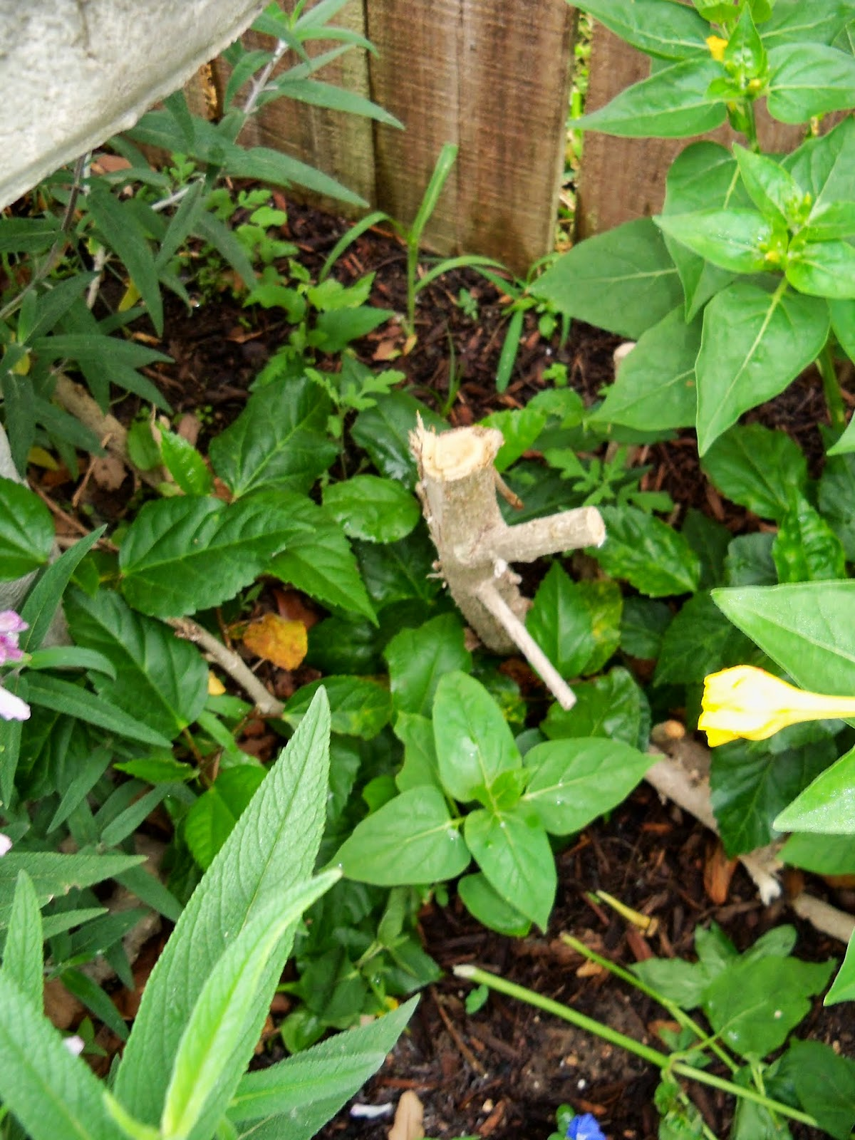 Gardening 2014 - 116_1854.JPG