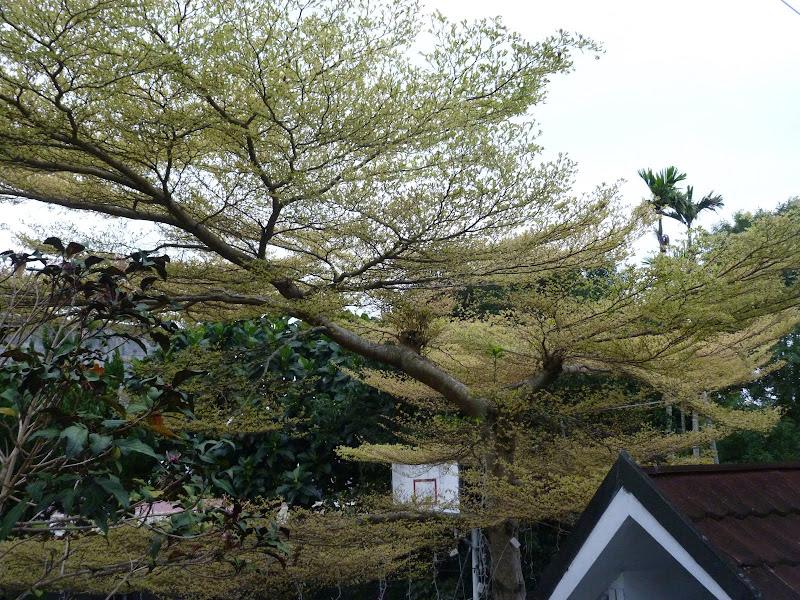 arbre rare