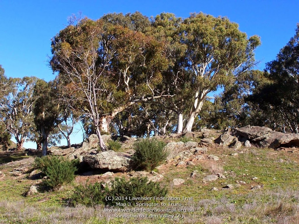 Springton to Eden Valley (6)