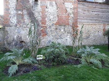 2018.02.04-012 plantes vivaces dans le jardin du tripot