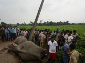 Deux éléphants électrocutés dans l'est de l'Inde