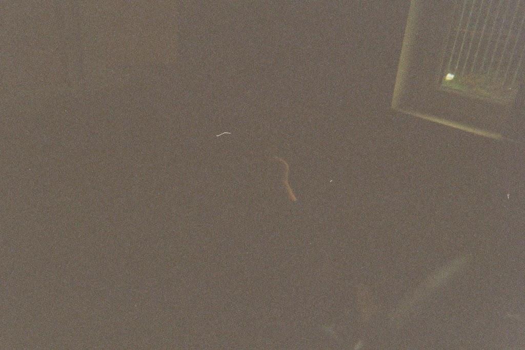 Zeeverkenners - Looptocht met ouderwetse camera - imm001_00A.jpg
