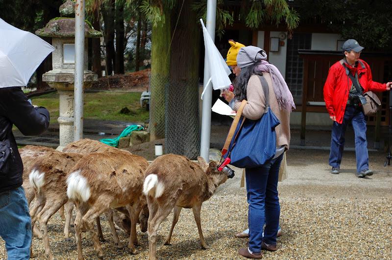 2014 Japan - Dag 8 - jordi-DSC_0569.JPG