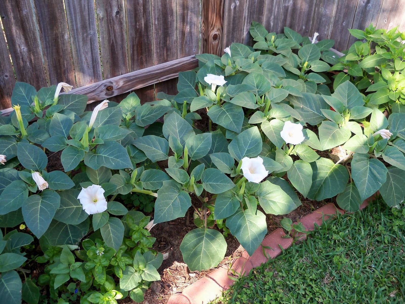 Gardening 2014 - 116_2002.JPG