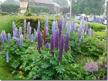 4 bancroft flowers