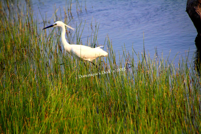 A wetland white bird
