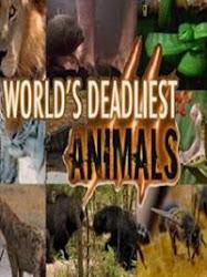 World's Deadliest Animals - Những loài động vật quý hiếm