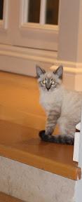 Sky Kitten - Rehomed UK