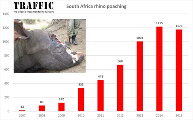 South Africa rhino poaching totals, 2007-2015. Graphic: Traffic.org