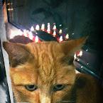 20121201-01-sven-advent.jpg