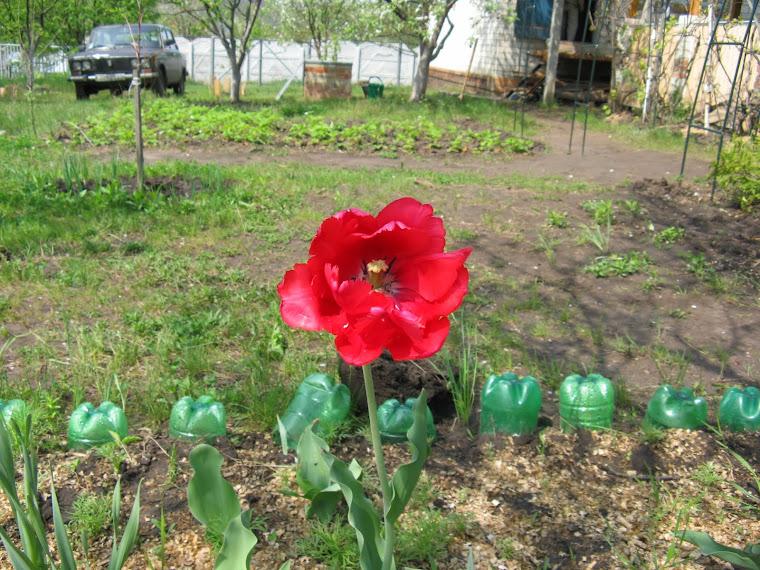 Дача: Просто весна!
