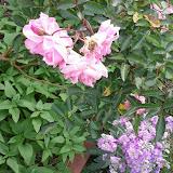 Gardening 2013 - IMG_20130330_094636.jpg